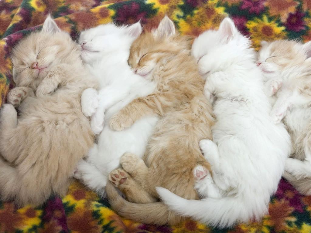 En güzel kedi resimleri - 21. resim