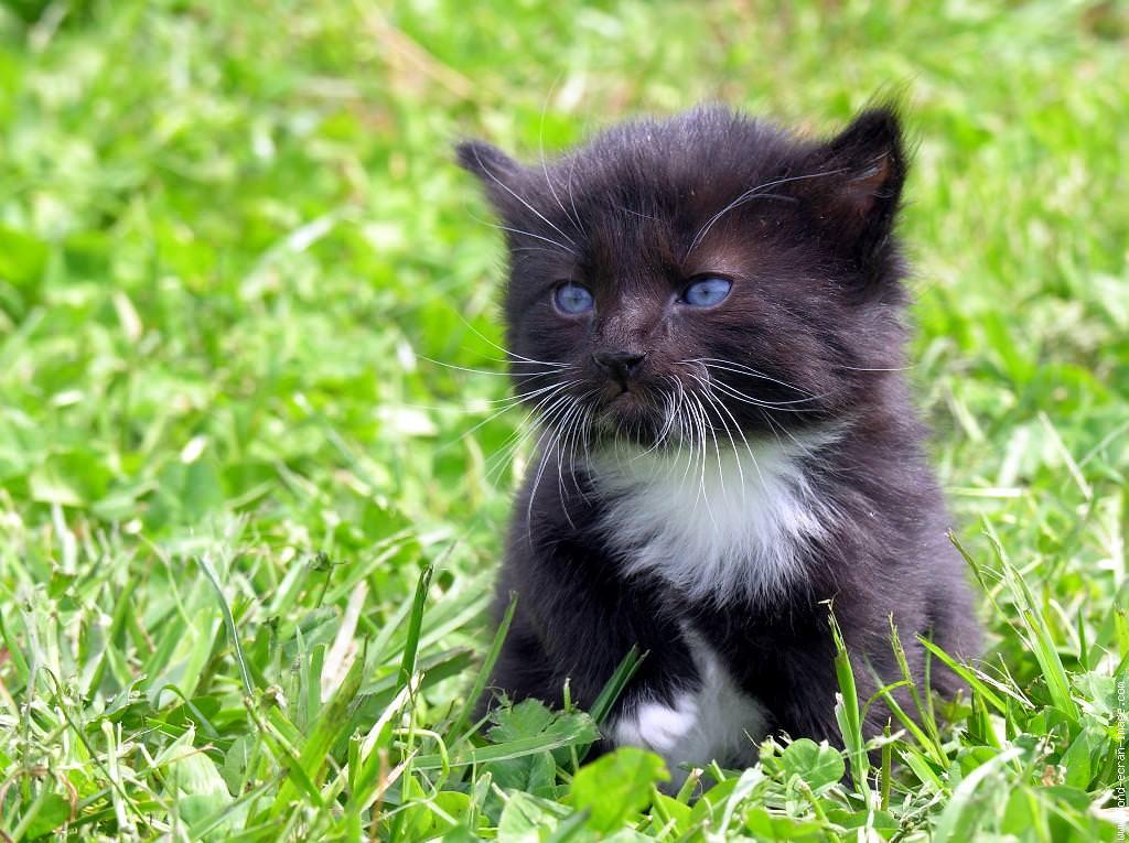 En güzel kedi resimleri - 22. resim