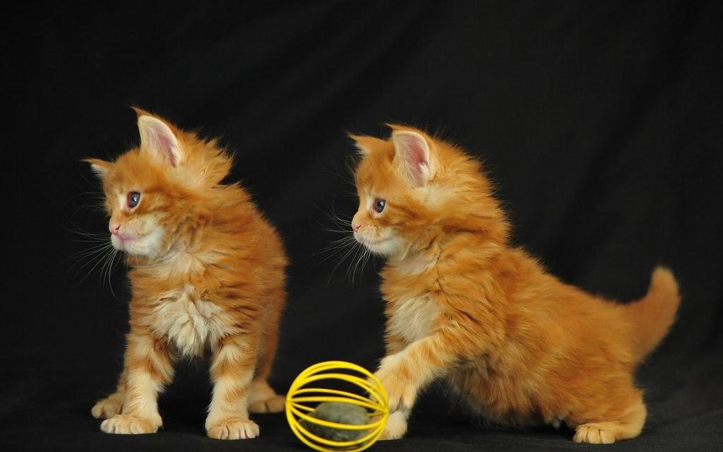 En güzel kedi resimleri - 23. resim