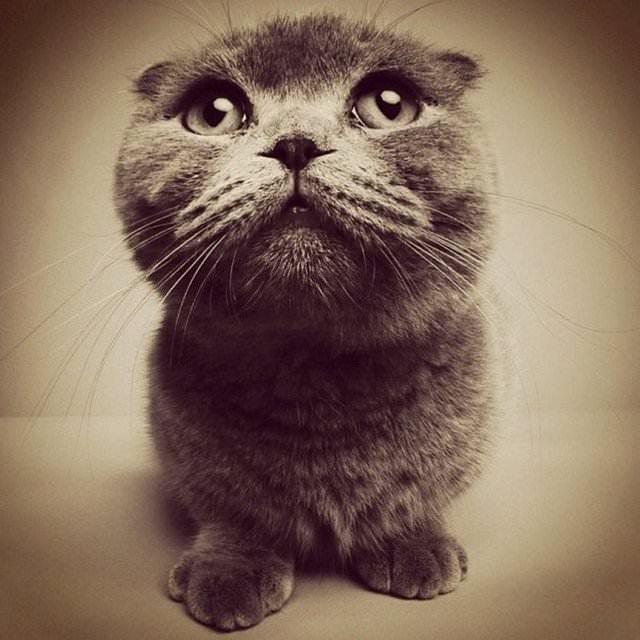 En güzel kedi resimleri - 24. resim
