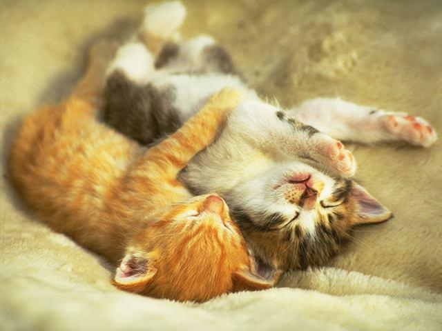 En güzel kedi resimleri - 25. resim
