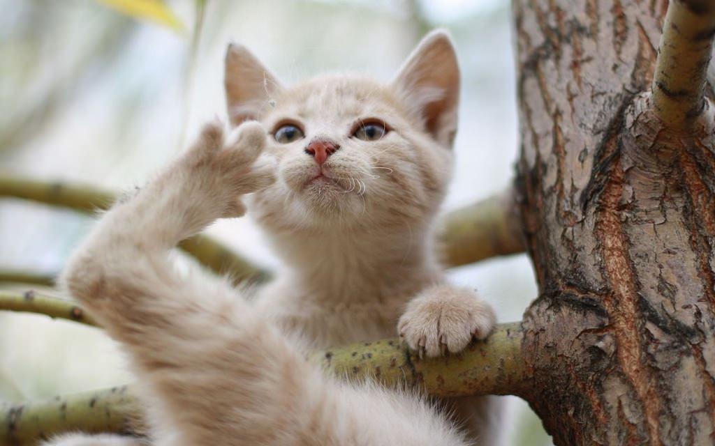 En güzel kedi resimleri - 26. resim