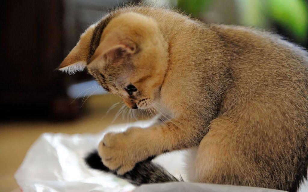 En güzel kedi resimleri - 27. resim