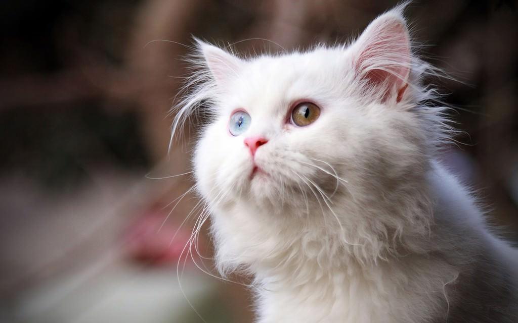 En güzel kedi resimleri - 29. resim