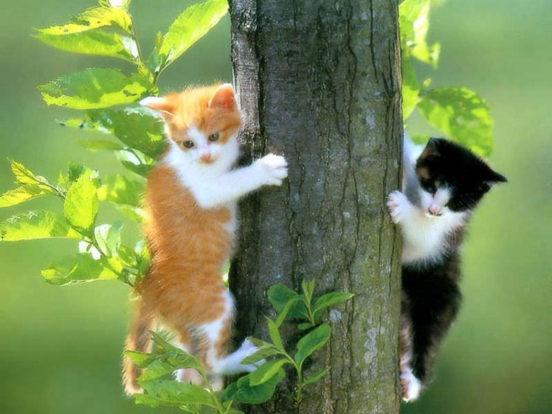 En güzel kedi resimleri - 3. resim