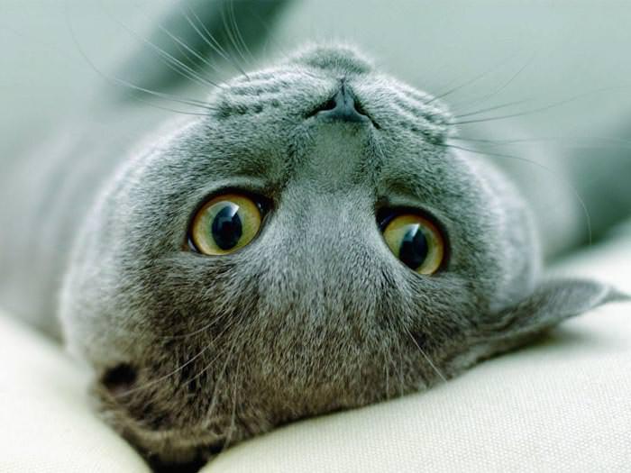 En güzel kedi resimleri - 30. resim