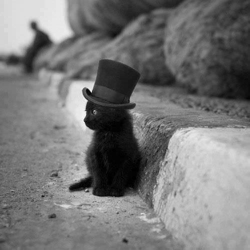 En güzel kedi resimleri - 32. resim