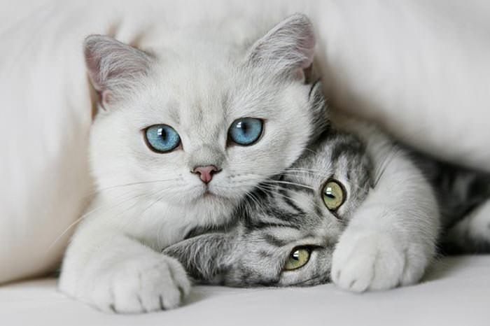 En güzel kedi resimleri - 33. resim
