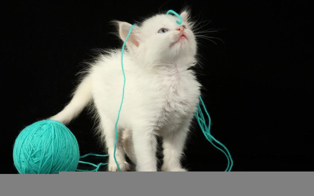 En güzel kedi resimleri - 34. resim