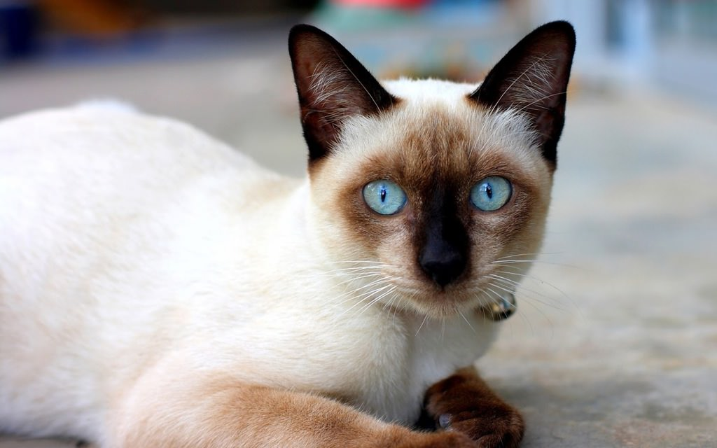 En güzel kedi resimleri - 35. resim