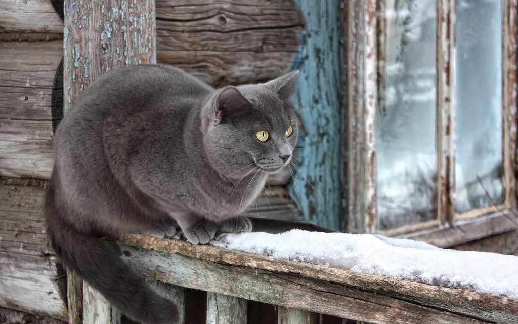 En güzel kedi resimleri - 36. resim