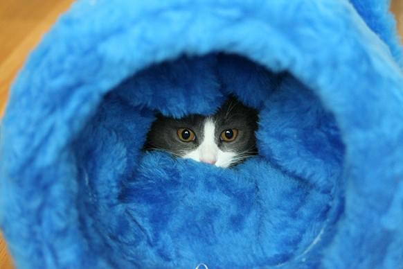 En güzel kedi resimleri - 38. resim