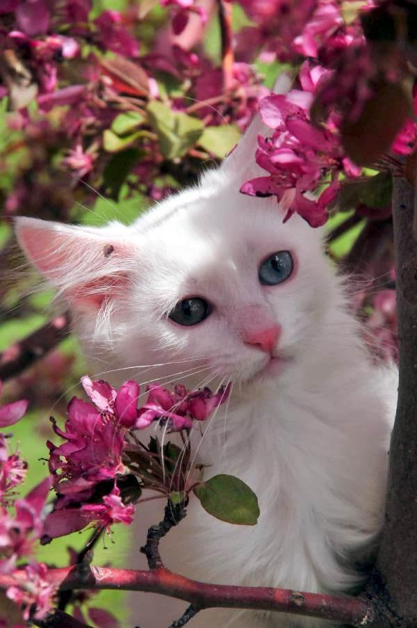 En güzel kedi resimleri - 39. resim