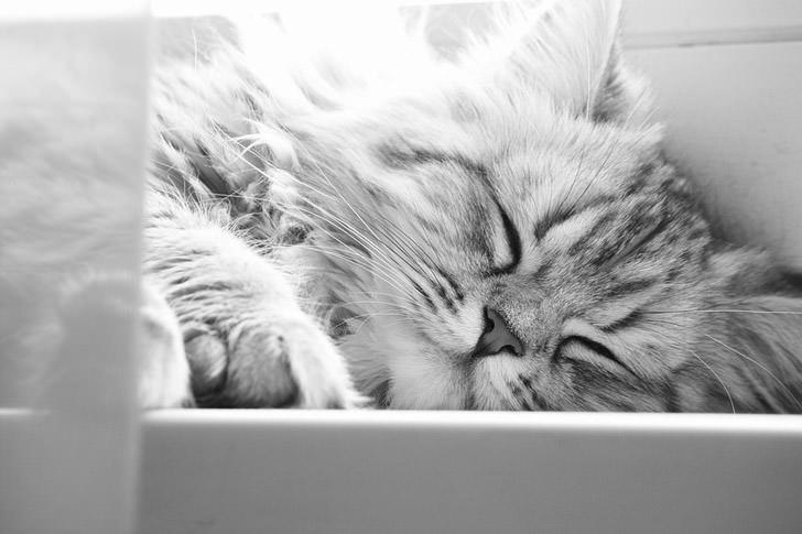En güzel kedi resimleri - 41. resim