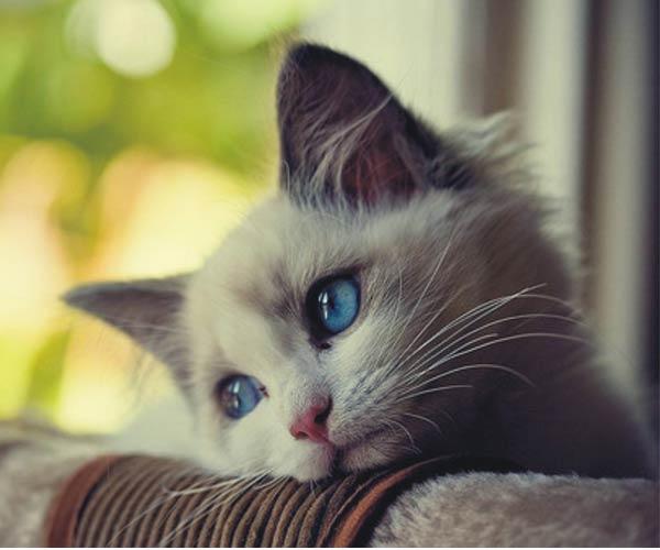 En güzel kedi resimleri - 42. resim