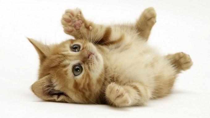 En güzel kedi resimleri - 43. resim