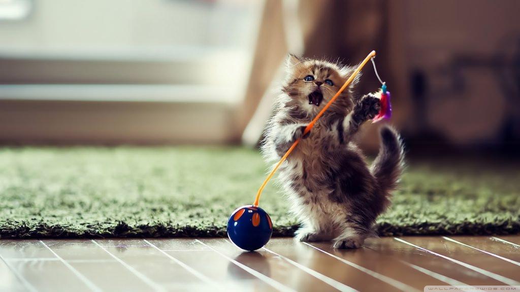 En güzel kedi resimleri - 46. resim