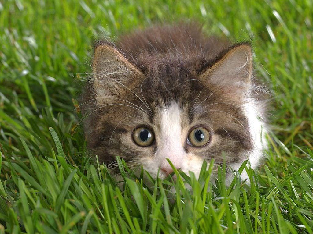 En güzel kedi resimleri - 47. resim