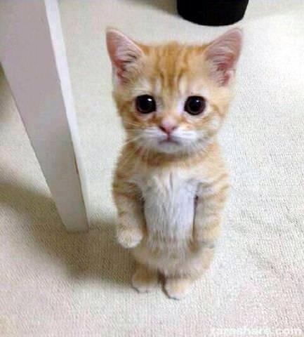 En güzel kedi resimleri - 48. resim