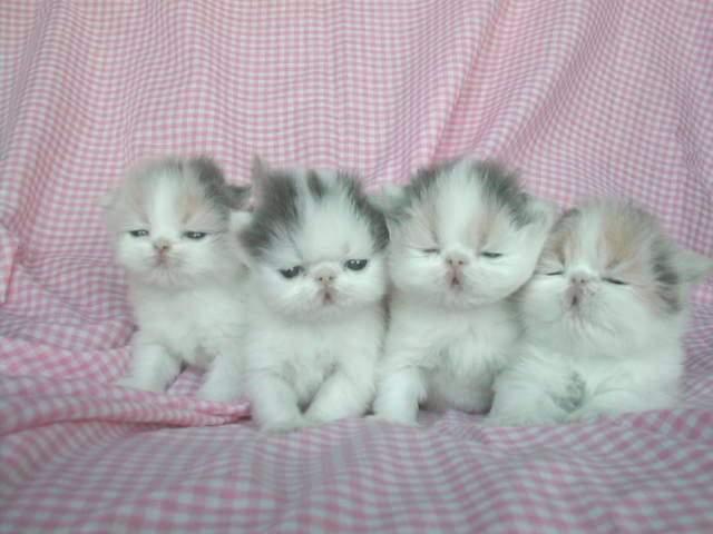 En güzel kedi resimleri - 49. resim