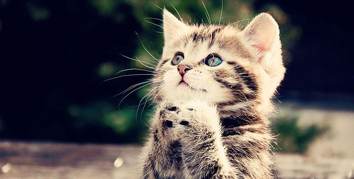 En güzel kedi resimleri - 5. resim