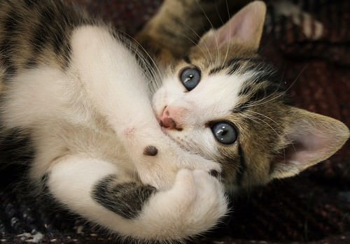 En güzel kedi resimleri - 50. resim