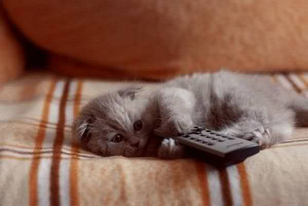 En güzel kedi resimleri - 51. resim