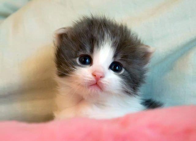 En güzel kedi resimleri - 52. resim