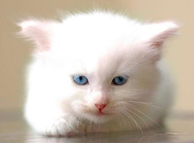En güzel kedi resimleri - 53. resim