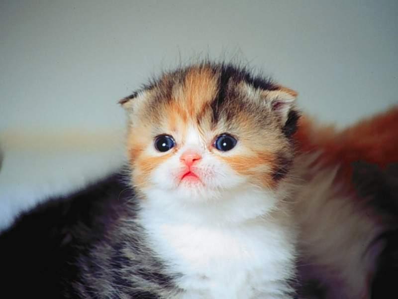 En güzel kedi resimleri - 54. resim