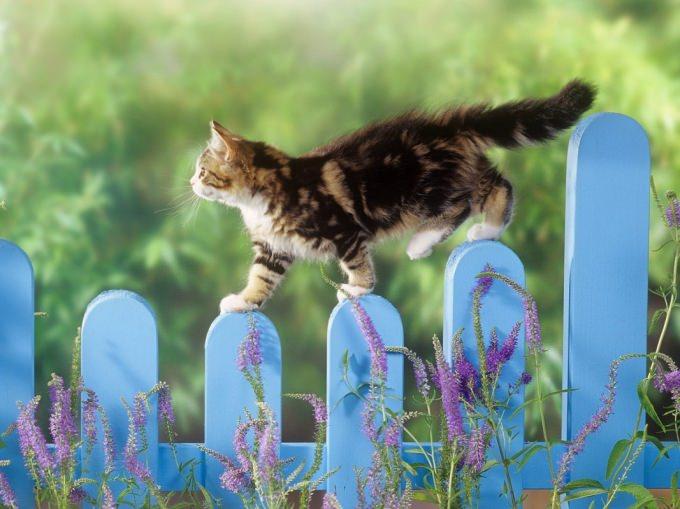 En güzel kedi resimleri - 55. resim
