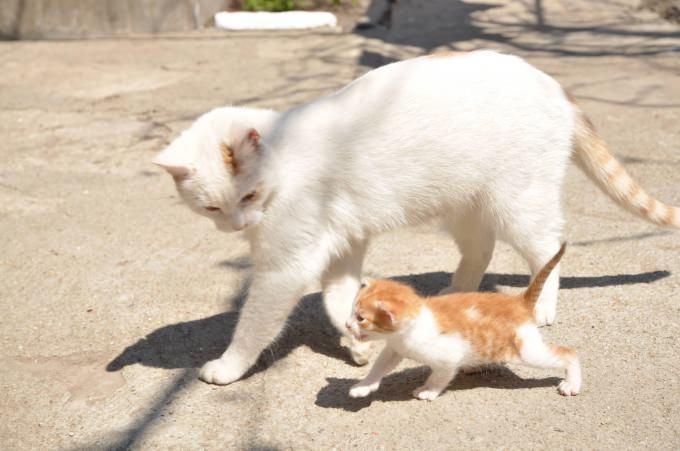 En güzel kedi resimleri - 57. resim