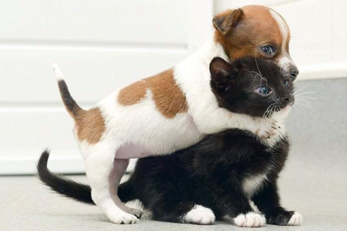 En güzel kedi resimleri - 58. resim