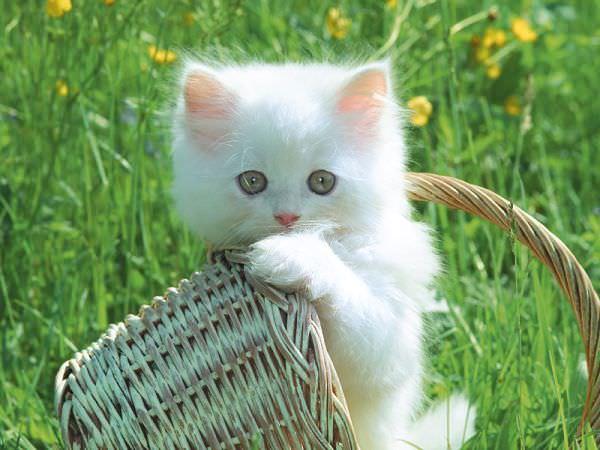 En güzel kedi resimleri - 59. resim