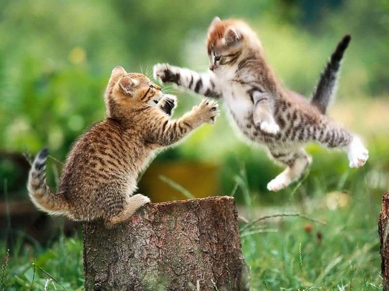 En güzel kedi resimleri - 6. resim