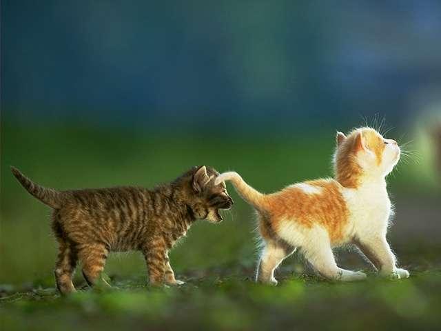 En güzel kedi resimleri - 60. resim