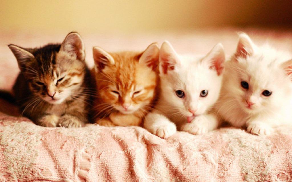 En güzel kedi resimleri - 61. resim