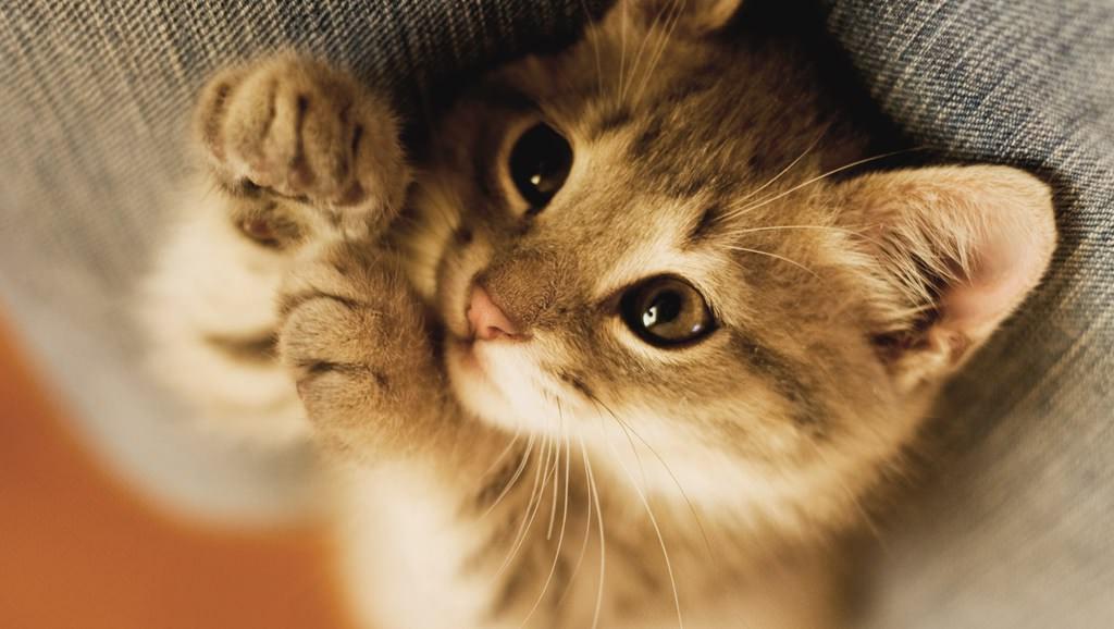 En güzel kedi resimleri - 62. resim