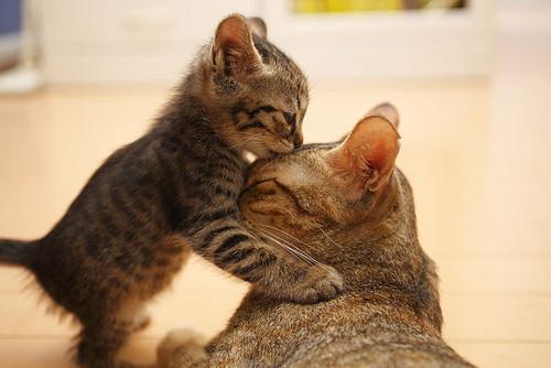 En güzel kedi resimleri - 64. resim