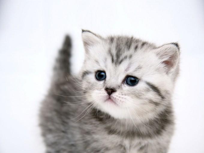 En güzel kedi resimleri - 65. resim