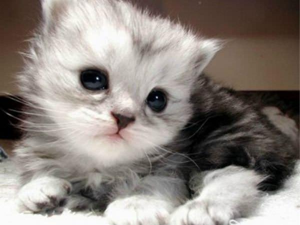 En güzel kedi resimleri - 66. resim