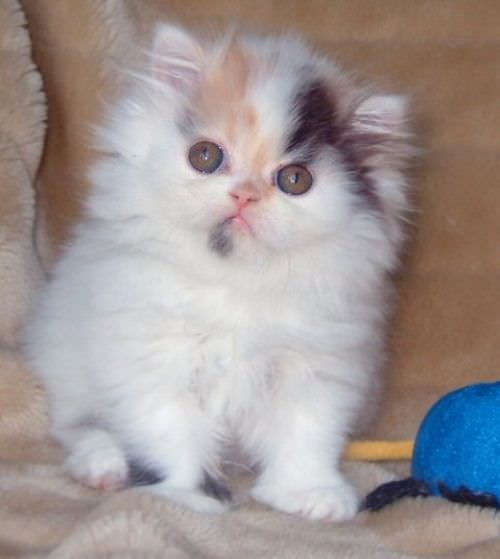 En güzel kedi resimleri - 67. resim