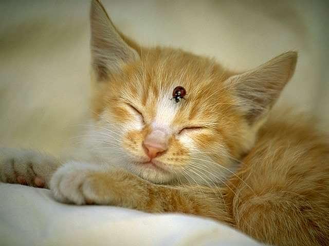 En güzel kedi resimleri - 68. resim