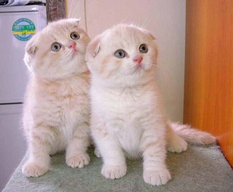 En güzel kedi resimleri - 69. resim