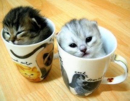 En güzel kedi resimleri - 7. resim