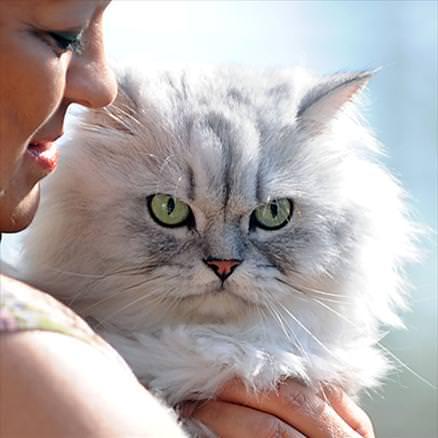 En güzel kedi resimleri - 70. resim