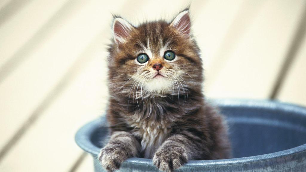 En güzel kedi resimleri - 71. resim