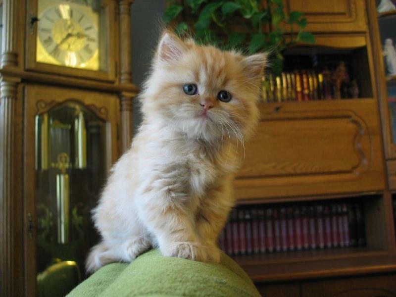En güzel kedi resimleri - 72. resim