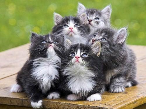 En güzel kedi resimleri - 75. resim