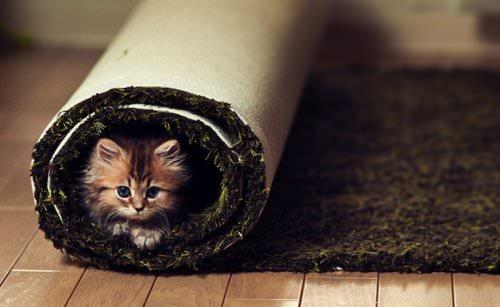 En güzel kedi resimleri - 76. resim
